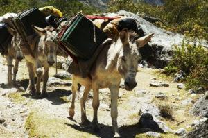 Trekking someggiato, onotrekking o asinotrekking e si riferisce a escursioni o passeggiate in compagnia degli asini