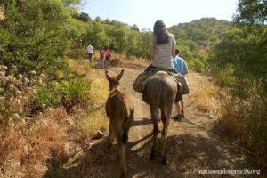L'Asino, è un'animale robusto che sa adattarsi alla siccità ed è resistente alla fatica, cammina infatti in media dai 25 ai 40 km al giorno
