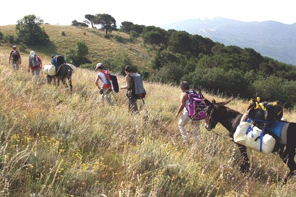 Il trekking someggiato è una forma di turismo ecologico che permette di scoprire un modo di vivere e di viaggiare del passato